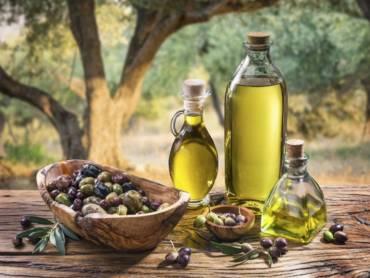 L'olivo: mitologia, letteratura e leggenda